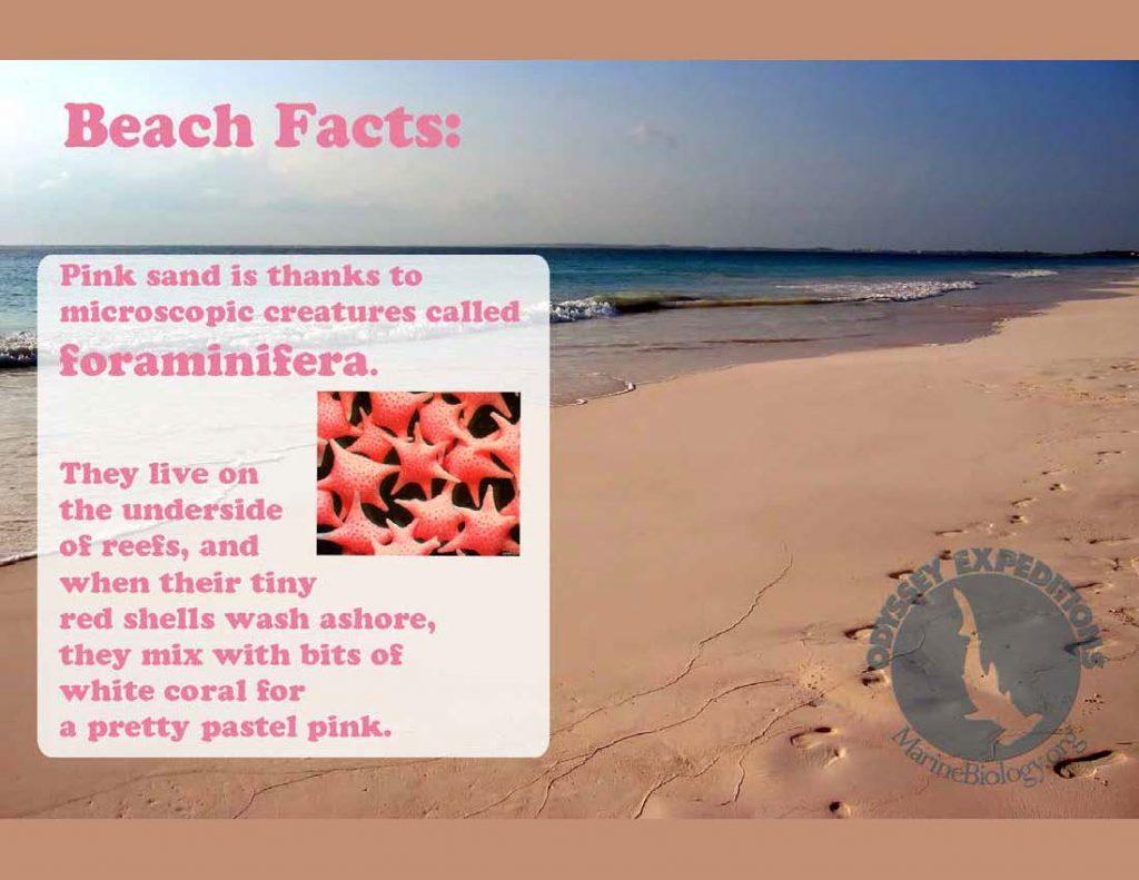 Beach Fact